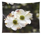 Dogwood Blooms Tapestry