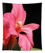 Dwarf Canna Lily Named Shining Pink Tapestry