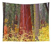 Fall In The Forest Tapestry