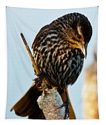 Female Red-winged Blackbird Tapestry