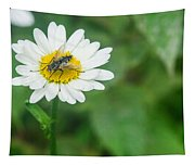 Fly On Daisy 3 Tapestry