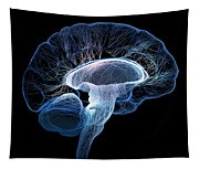 Human Brain Complexity Tapestry