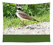 Killdeer Tapestry