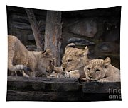 Lion Cubs Tapestry