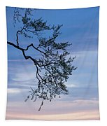 Low Angle View Of Tree At Dawn, Dark Tapestry