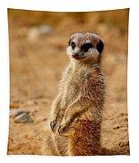 Meerkats Tapestry