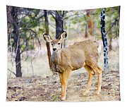 Mule Deer Does Tapestry