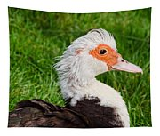 Muscovy Duck Tapestry