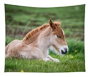New Born Foal, Iceland Purebred Tapestry