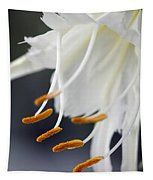 Peruvian Daffodil Named Advance Tapestry
