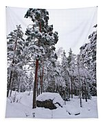 Pine Forest Winter Tapestry