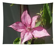 Pink  Clematis   # Tapestry
