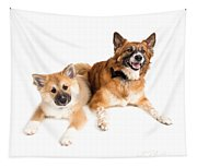 Icelandic Sheepdog Puppy And Adult  Tapestry
