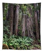 Redwood Tapestry