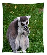 Ring-tailed Lemur Tapestry