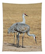 Sand Hill Cranes Eating Tapestry