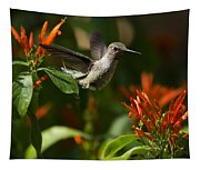 The Hummingbird Hover  Tapestry