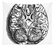 Vesalius: Brain Tapestry