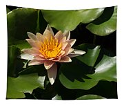 Exotic Colors - A Soft Coral Waterlily Tapestry