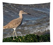 Western Willet Tapestry