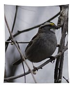 White-throated Sparrow Tapestry