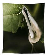 White Winged Moth Insect On A Green Tree Leaf Tapestry