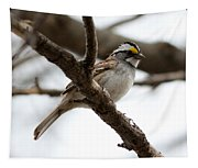 Yellow Crowned Sparrow Tapestry