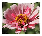 Zinnia From The Whirlygig Mix Tapestry