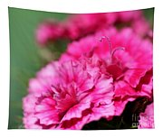 Sweet William From The Super Duplex Bluepoint Mix Tapestry