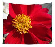 Dahlia From The Showpiece Mix Tapestry