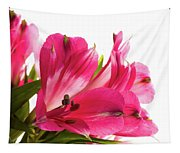 Alstroemeria Flowers Against White Tapestry