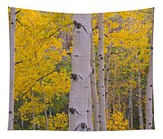 Aspen Trees In A Forest, Telluride, San Tapestry