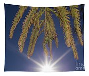 Autumn Coniferous Tapestry