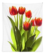 Backlit Tulip Flowers Against White Tapestry