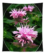 Bee Balm Named Panorama Pink Tapestry