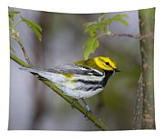 Black Throated Green Warbler Tapestry