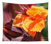 Canna Lily Named Durban Tapestry