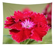 Cherry Dianthus From The Floral Lace Mix Tapestry