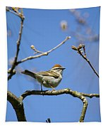 Chipping Sparrow Perched In A Tree Tapestry