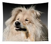 Collie Dog  Tapestry