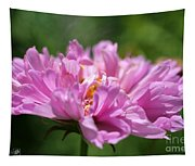Double Click Cosmos Named Rose Bonbon Tapestry