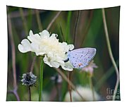 Eastern Tailed Blue Butterfly On Pincushion Flower Tapestry