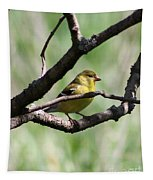 Female American Goldfinch Tapestry