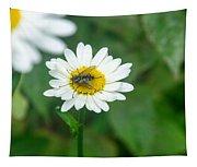 Fly On Daisy 3 Tapestry