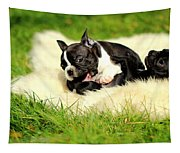French Bulldoggs Tapestry