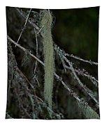 Lichen Tapestry