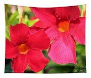 Mandevilla Named Sun Parasol Crimson Tapestry