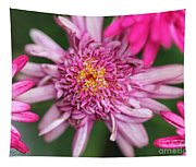 Marguerite Daisy Named Summer Song Rose Tapestry
