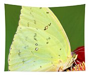 Orange Barred Sulfur Butterfly Tapestry