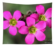 Oxalis Magnifica Tapestry